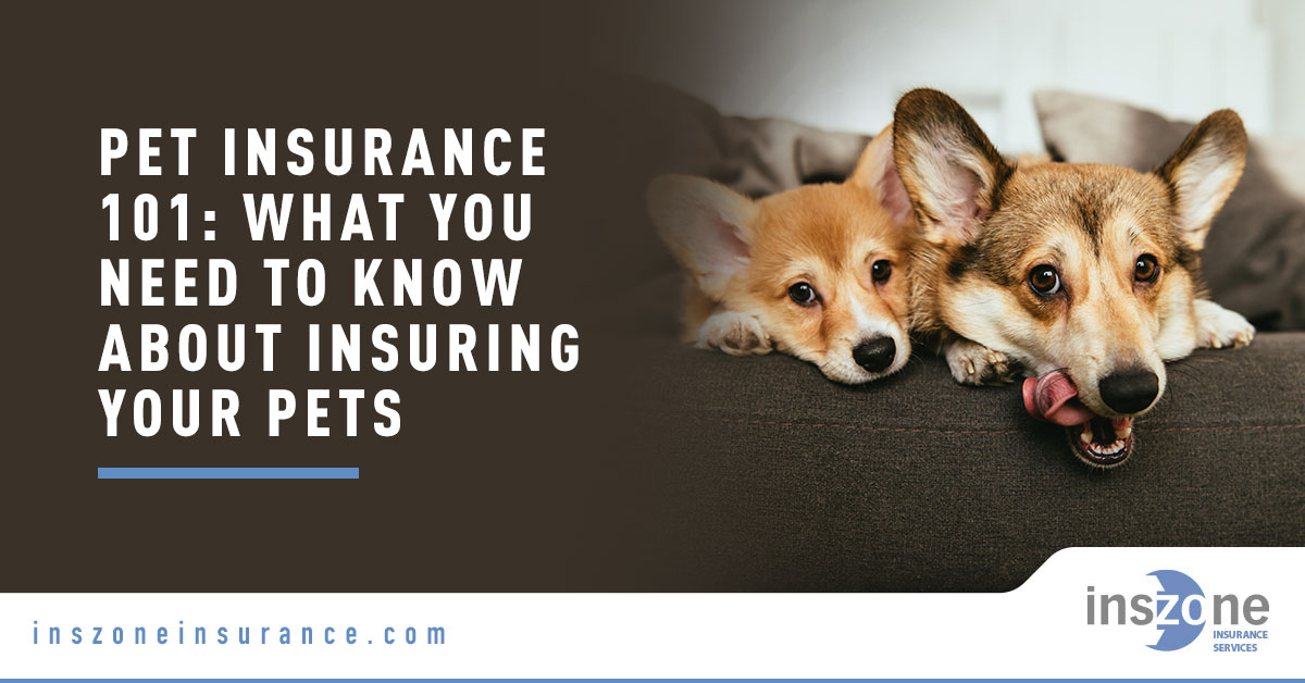 Two Dogs on Couch - Banner Image for Pet Insurance 101: What You Need to Know About Insuring Your Pets Blog